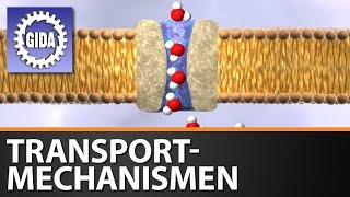 Download GIDA - Transportmechanismen - Biologie - Schulfilm - DVD (Trailer) Video