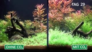 Download Pflanzenaquarium mit und ohne CO2 im Zeitraffer Video