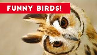 Download Funny Parrot & Bird Videos Weekly Compilation July 2017 | Funny Pet Videos Video