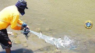Download Wow Pescador Atrapa lisas en la desembocadura de río Video