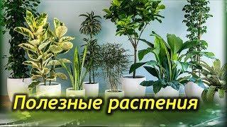 Download Самые ПОЛЕЗНЫЕ комнатные растения для вашего дома! Video