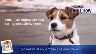 Download Dog Chow - Гаф-патруль с Юччи Video
