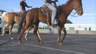 Download Students suspended after riding horses to school Video