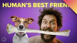 Download How Dogs Became Our Best Friends (ft. MinuteEarth!) Video