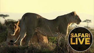 Download safariLIVE: The Gauntlet - Episode 3 - August 11, 2018 Video