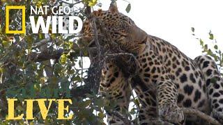 Download Safari Live - Day 185   Nat Geo Wild Video