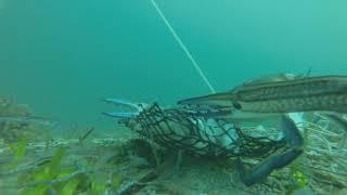Download Gopro Crabbing - Wallaroo South Australia - April 2015 Video