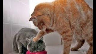 Download Los Mejores Vines de Gatos del 2015! Recopilación Gatos Graciosos Video