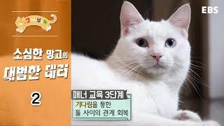 Download 고양이를 부탁해 - 소심한 망고의 대범한 테러 #002 Video