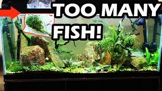 Download DON'T DO THIS No Maintenance Tank Update- Overstocked Aquarium Video