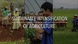 Download FAO Policy Series: Sustainable Intensification of Agriculture Video