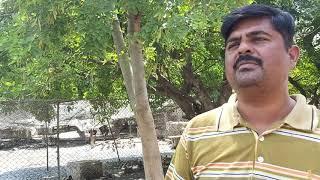 Birds market Aseel Murga mandi Pakistan Full video Hsn