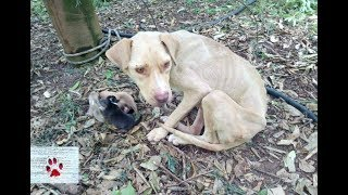Download Rescue of a mother dog who gave birth chained in the middle of nowhere Video
