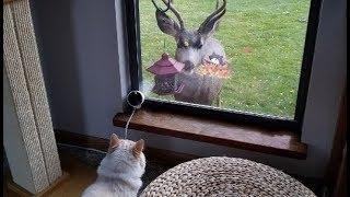 Download この猫の家にはなぜか毎日動物達が挨拶に訪れる。 Video