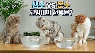 Download 더운날 시원한 냉수냐? 이열치열 온수냐? 고양이들의 선택! Video