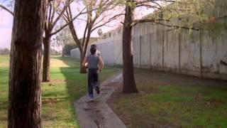 Download Karate Tigris.avi Video