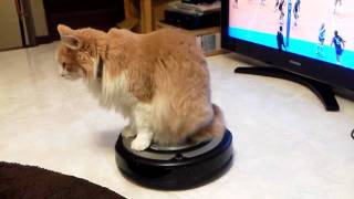 Download ルンバに乗るネコ Cat riding ROOMBA Video