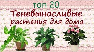 Download Теневыносливые растения для дома//ТОП 20 Video