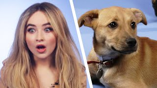 Download Sabrina Carpenter Plays With Puppies While Answering Fan Questions Video