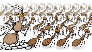 Download Invasion of the Yellow Crazy Ants! Video