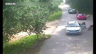 Download Tijger doodt vrouw in safaripark Video