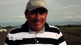 Download Produccion del algodón y desafíos con recursos naturales: experiencia en Colombia Video