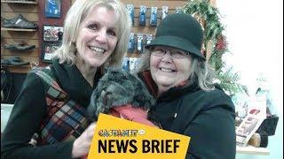 Download Stolen pup returns home Video