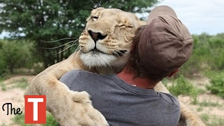 Download 10 Unbelievable Animals That SAVED People's Lives Video