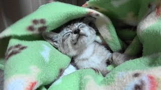 Download 野良子猫 雨の夜にやって来た男の子 Video