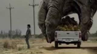 Download Two Giant Gorilla plays the car Video