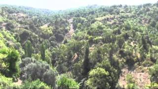Download Figs in Turkey Video