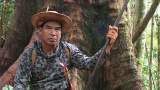 Download The Forbidden forests of the Dayak, Borneo, Indonesia Video