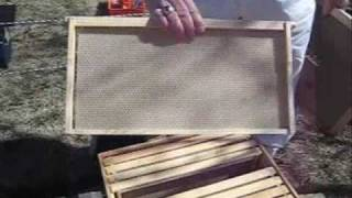 Download Starting a New Bee Hive Video