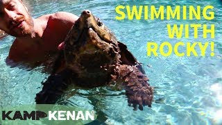 Download Swimming with an Alligator Snapping Turtle! Video
