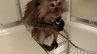 Download OMG I THOUGHT MY MONKEY HAD POOPED IN THE SHOWER WITH ME Video