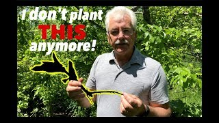 Download NO MORE COMFREY IN THE PERMACULTURE ORCHARD Video