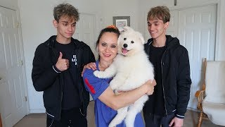 Download WE SURPRISED OUR MOM WITH A PUPPY! Video