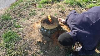 Download The most amazing way to remove a stump!! E16 Video