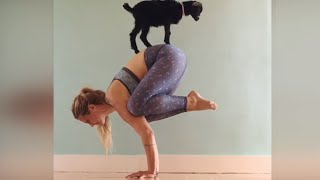 Download Baby Goat Does Yoga With 'Yoga Girl' Video