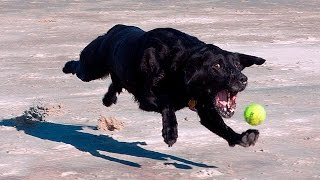 Download Funny Slow Motion Dogs #85 Video