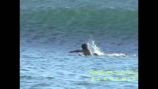 Download entrenamiento de surf especial uno a uno Video