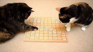 Download おかしい猫 - かわいい猫 - おもしろ猫動画 HD #38 Video