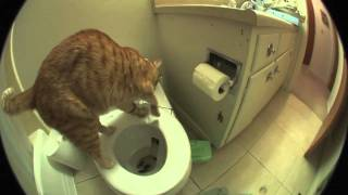 Download Marmalade The Cat Uses The Toilet And Flushes When He Is Done!! Video