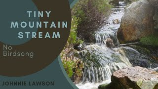 8 Hour Nature Sound Relaxation-Soothing Forest Birds Singing