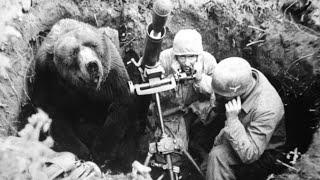 Download The Heart-Melting Story Of Wojtek, The Soldier Bear Video