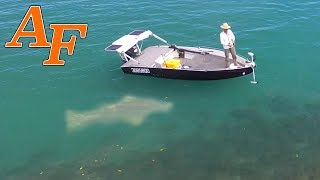 Download Catching 24 Fish and a Monster Grouper aka Queensland Groper w Jump Cut Edit EP.366 Video