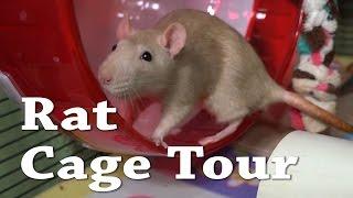 Download Rat Cage Tour Video