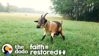 Download Goat Who Couldn't Walk Teaches Herself To Run | The Dodo Faith=Restored Video