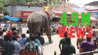 Download Elephant in KeralaTemple Festival HD Video Video