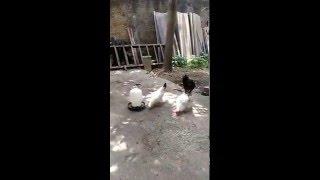 Download Nonstop - Nhà Có Chó Không - DJ Sáng Quốc Ninh Bình :)))))) Video